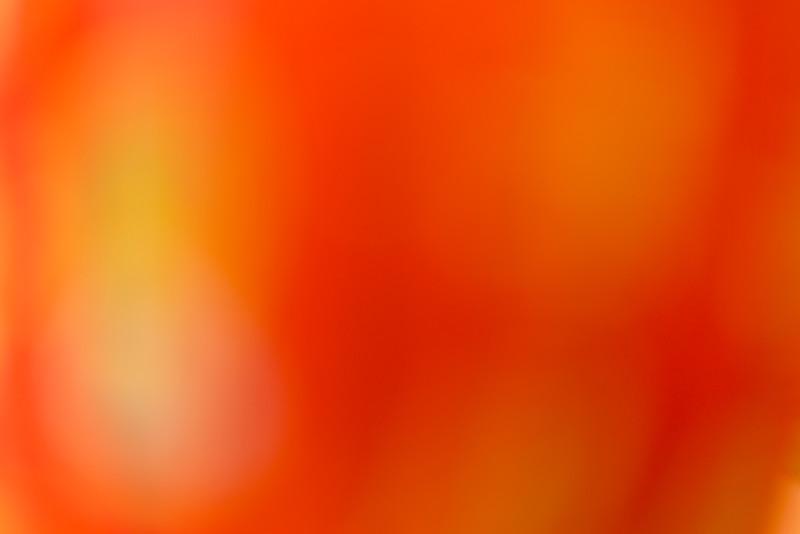 Colour Washes BH5A7008.jpg