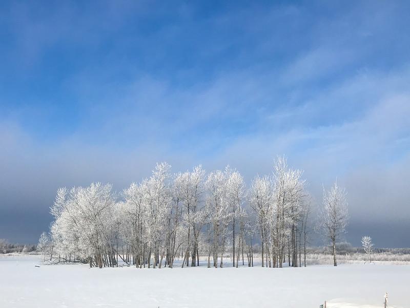 Hoar frost winter landscape CR229-29 Sax-Zim Bog MN  IMG_0202.jpg