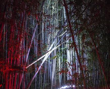 Night Photography in the Arboretum