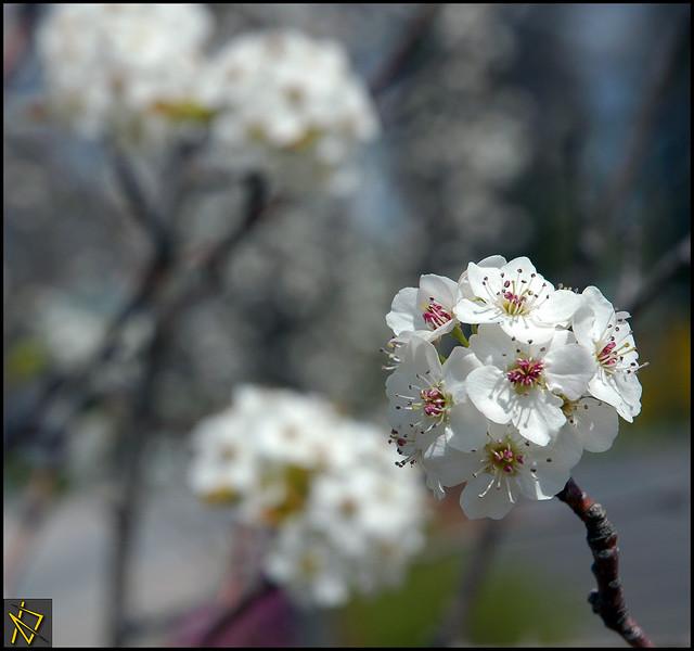 SpringDay5.jpg