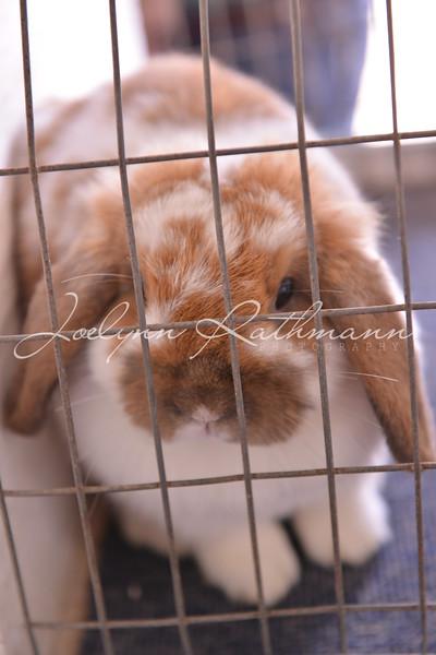 Open Rabbit Show