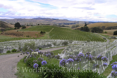 Waipara Valley and Canterbury