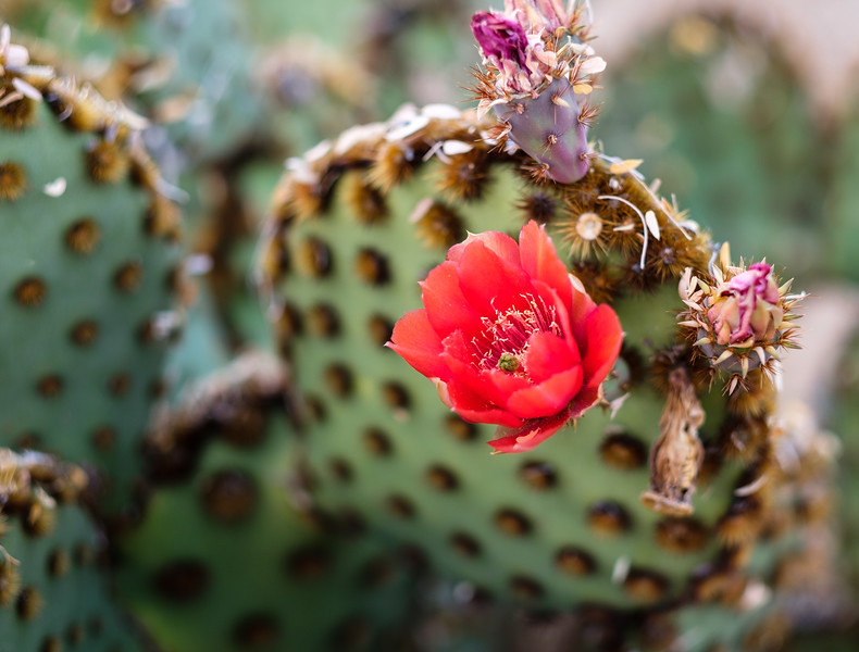 Tucson_17-648.jpg