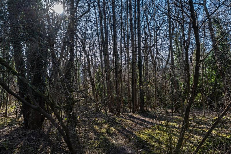 Woodland behind Woodland Road