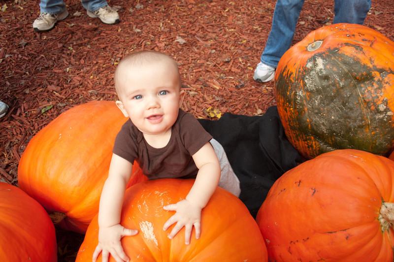 7 Months at Burt's Pumpkin Patch