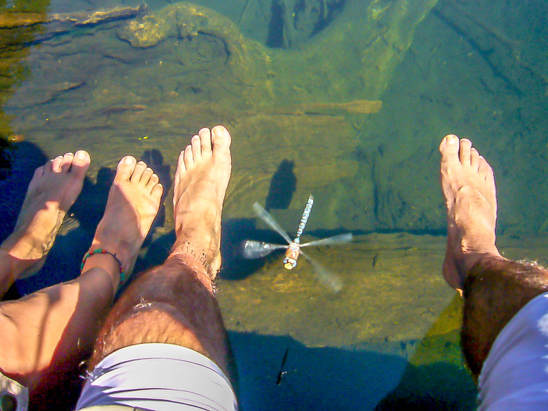 FEET AND DRAGONFLY.jpg