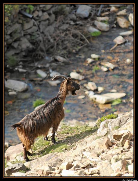 de Regoufe a Drave - 05-04-2008 - 5891.jpg