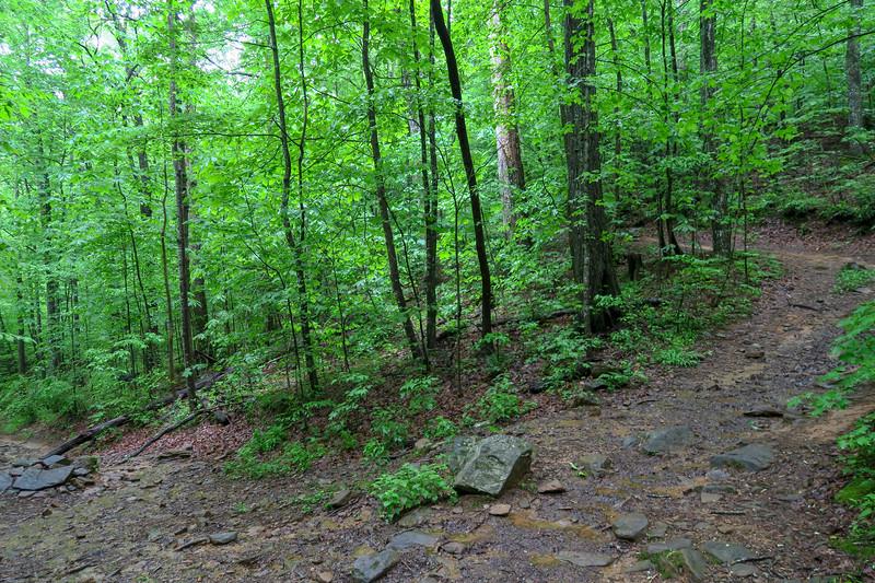 Lower Sidehill Trail -- 2,460'
