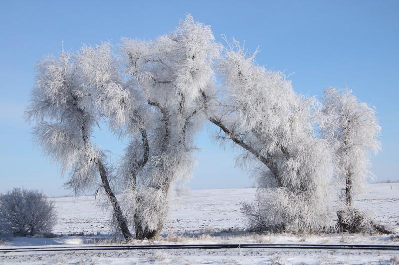 Winter Wonders 02.jpg