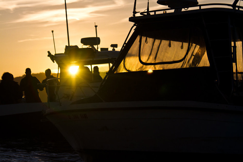 . The rising sun sheds light on the gathering masses of media boats. Photo by Ben Ingram of Ben Ingram Visuals and http://www.santacruzwaves.com