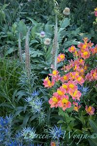 Pettifer's Garden