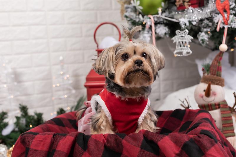 12.10.19 - Leide e Mel's (Mel Pet) Studio Christmas 2019 - -42.jpg