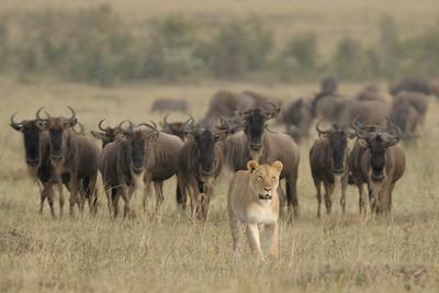 kenya (09-2010)