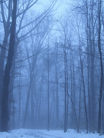 Stock Photography- Winter Woods