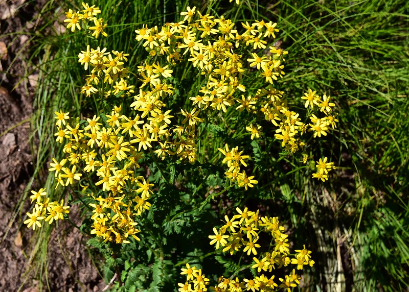 NEA_0374-7x5-Flowers.jpg