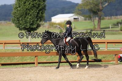 Hunter Ring: Short Stirrup Equitation