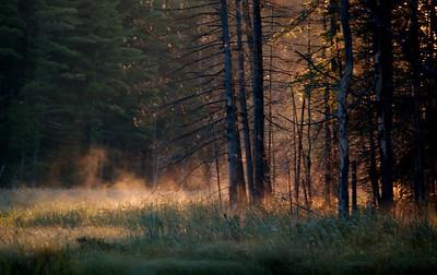 Algonquin;Bright Family;Algonquin;Fog;Trees