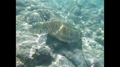 Hawaii Video
