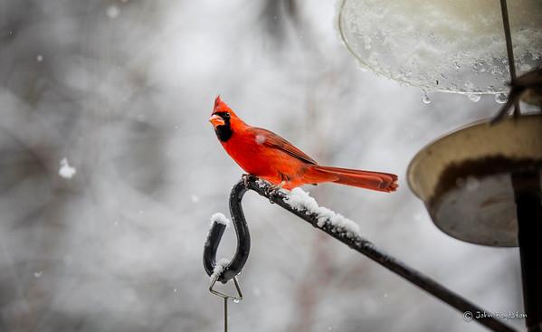 December Snow Day Birds
