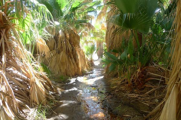 Pushawalla Palms 2.25.10