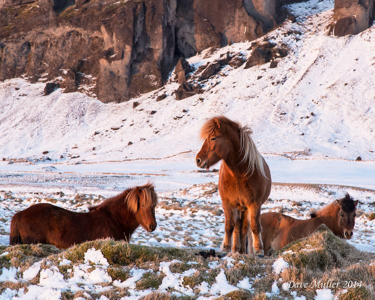 Iceland in Winter MKIII-20140222-0062.jpg