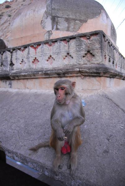 MonkeyTemple-40.jpg