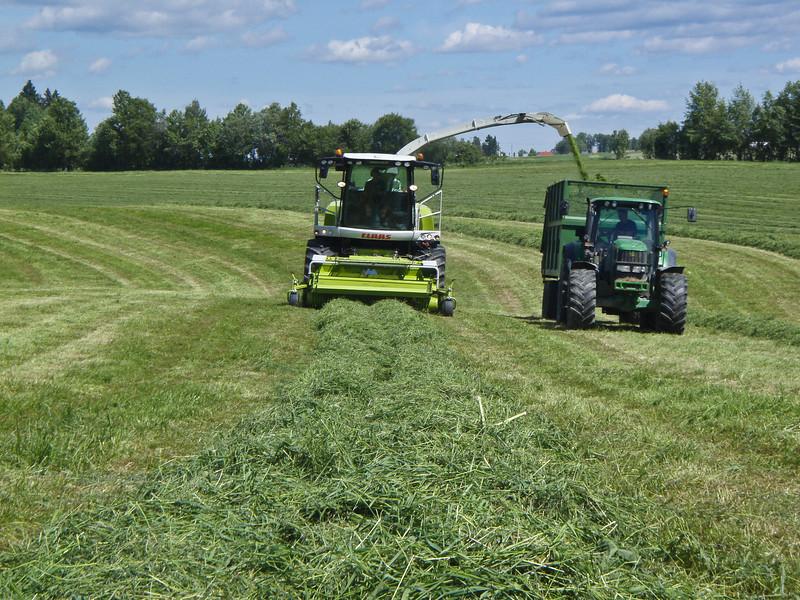 Grashøsting-37