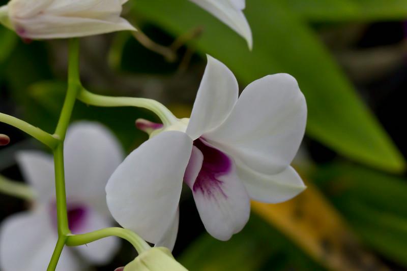 Orchid Farm - Ian 021.1.jpg