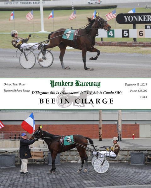 12132016 Race 6-Bee In Charge.jpg