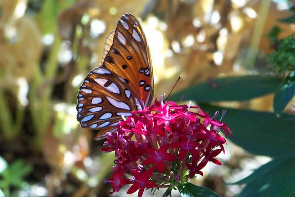 Hummingbirds and Butterflies 2010