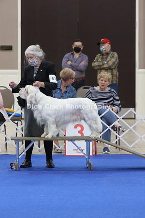 CSCA Regional Specialty Veteran Dogs 9+ Years