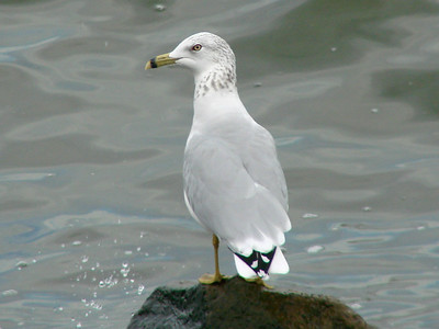 2009 Birds (3) - Jul-Sep