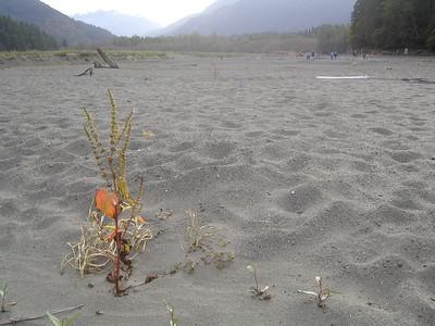 September 2012 - Former Lake Aldwell, Elwha River Restoration