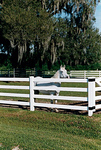 4 Rail Fence Gallery