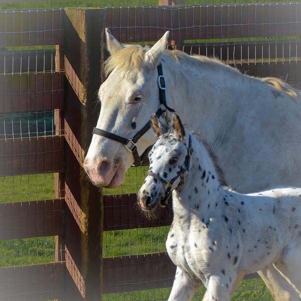Horses 2-1104.jpg