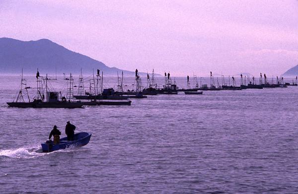 Sockey fishing near Lummi Island, Washington State.