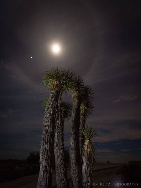 Joshua Tree / Moon Halo