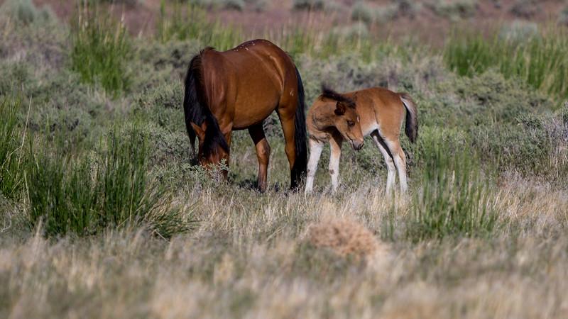 Wild Mustangs 2019-50.jpg