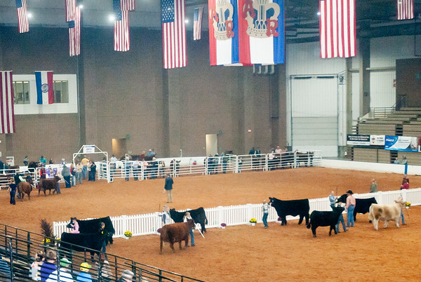 2019 American Royal Cattle