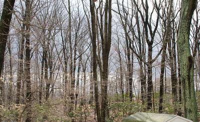 set 3 April Trees, Woods progression 2011