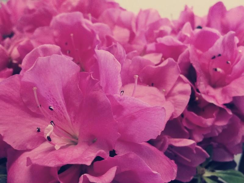 flower 2.jpg