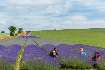 Summer Meadows of Hertfordshire