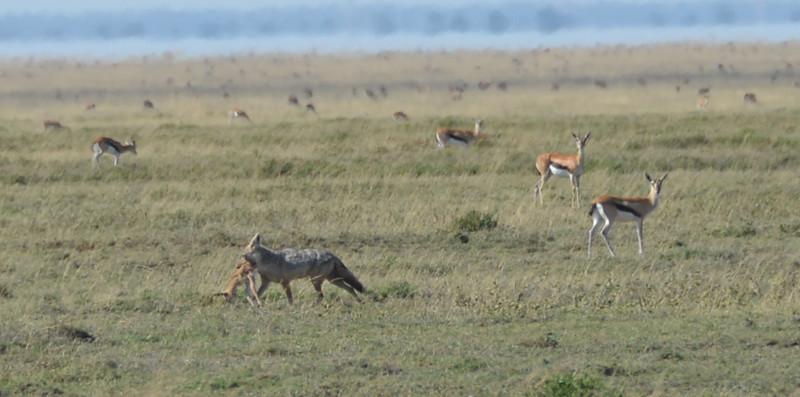 East Africa Safari 391.jpg