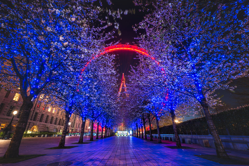 London-Eye-night-blossom.jpg
