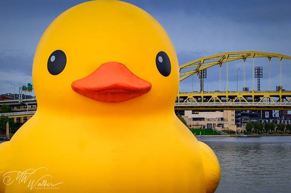 The Duck visits Pittsburgh