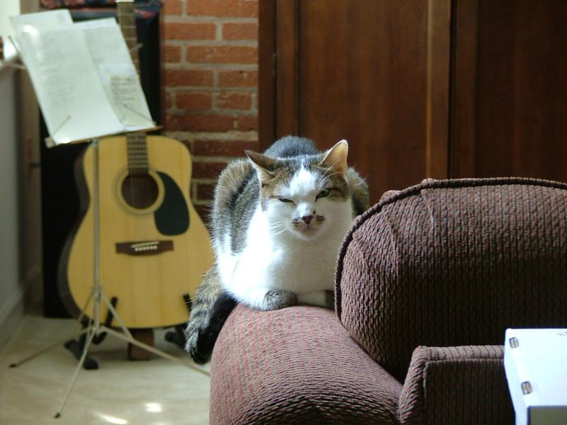 Guitar, cat