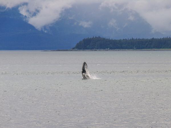 Alaska Cruise - 2006
