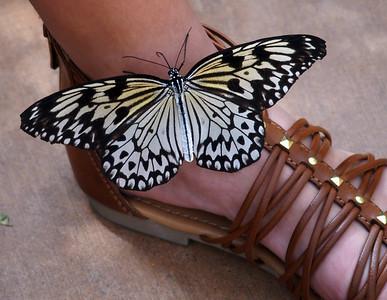 Butterfly Wonderland  6/2/16
