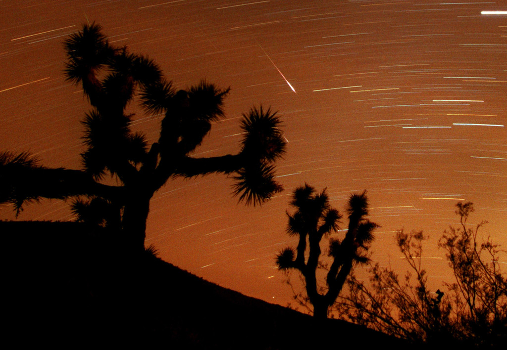 . Several Leonids meteors are seen streaking through the sky over Joshua Tree National Park, Calif., looking to the south in the Southern California desert in this approximately 25-minute time exposure ending at 3:45 a.m. PST (11:45 UT) Sunday, Nov. 18, 2001. Two are visible at center, one partly hidden behind a Joshua tree branch.  Two more faint meteors are just above the scrub brush at lower right, and two other faint meteors appear at top and center left.. The Leonid shower occurs each November, when the Earth\'s orbit takes it through a trail of dust particles left by the Comet Tempel-Tuttle, which swings around the sun once every 33 years. The horizontal streaks are stars and or planets. (AP Photo/Reed Saxon)