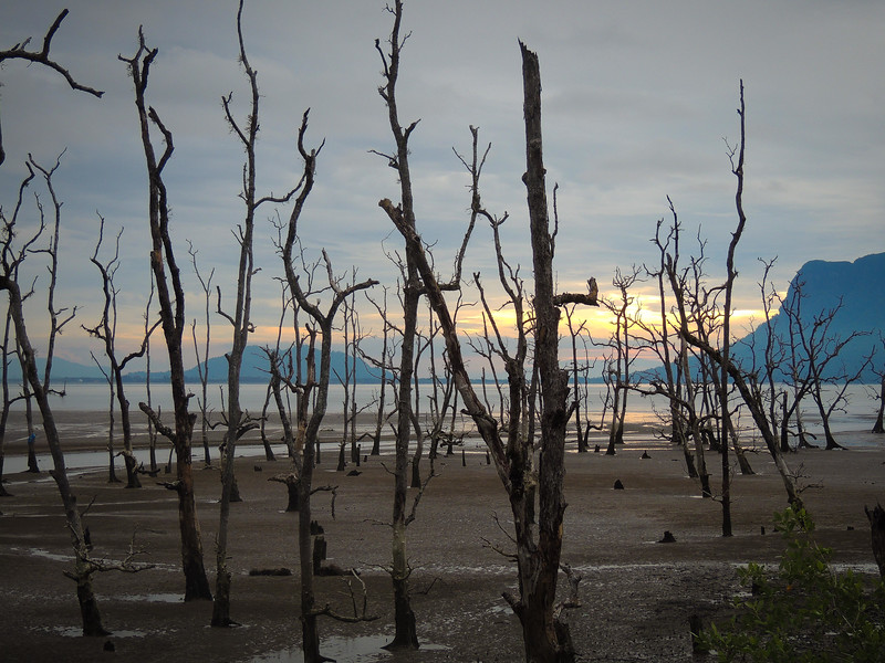 Borneo-2014-16.jpg